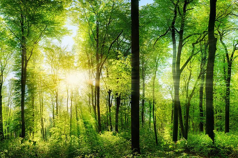 Environmentally Friendly pledge - TVF&S